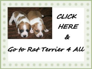 Ratterriers4all